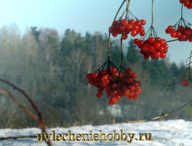 uvlecheniehobby.ru.природа24