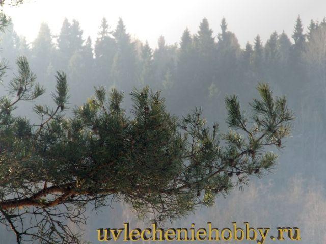 uvlecheniehobby.ru.природа22