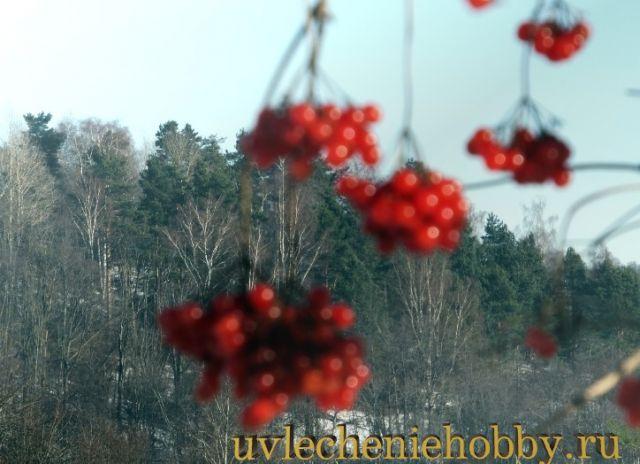 uvlecheniehobby.ru.природа23