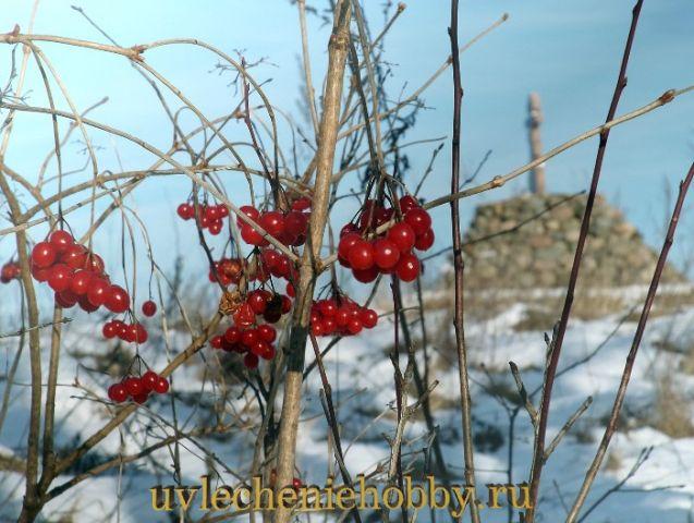 uvlecheniehobby.ru.природа29