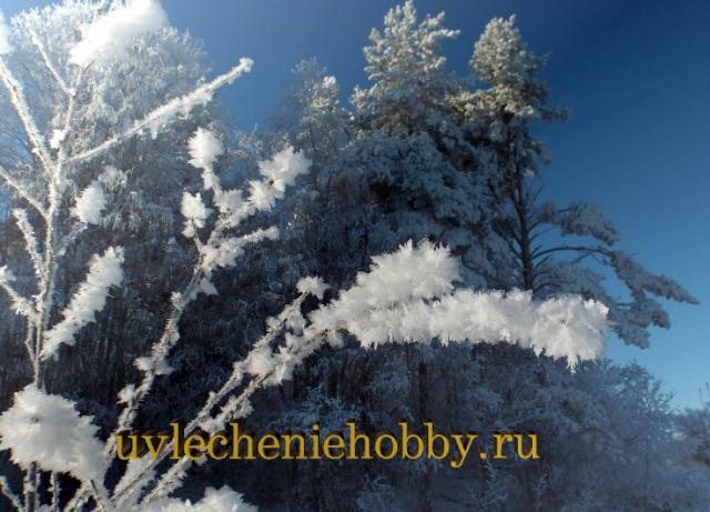 uvlecheniehobby.ru.природа5