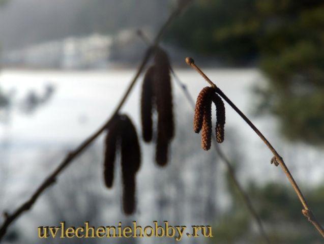 uvlecheniehobby.ru.природа27