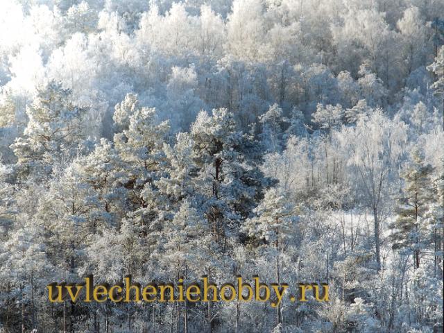 uvlecheniehobby.ru.природа2
