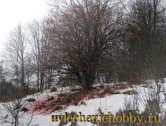 uvlecheniehobby.ru.природа12