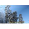uvlecheniehobby.ru.природа7