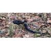 Змейка апрельская 2016